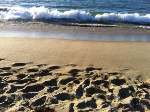 beach-1237938_1280.jpg